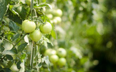 Gardening and Squash Frustration